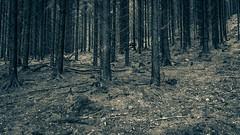forest series #236 (Stefan A. Schmidt) Tags: forest germany pentaxart schwarzweis