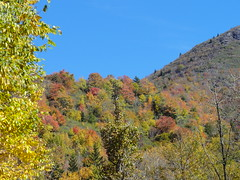 DSC07706 (TerrMys) Tags: northcarolina nc southern appalachians fall autumn october