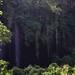 Mt. Elgon lava tubes