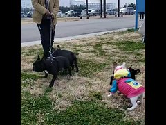 Cute Friendships Dogs (tipiboogor1984) Tags: aww cute cat funny dog youtube