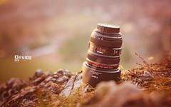 Canon EF 24-70mm f/4 L IS USM (davide978) Tags: davide978 davide colli davidecolli canon italy 8w9a9229modifica ef 2470mm f4 l is usm canonef2470mmf4lisusm bokeh