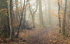 Path at the edge of the forest (Netsrak) Tags: baum eu eifel europa europe forst landschaft natur nebel rheinland rhineland wald fog forest mist nature trees winter woods bäume