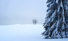 ... (a.penny) Tags: schnee snow winter baum tree panorama baume trees fuji finepix fujifilm x10 apenny