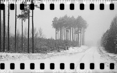 Bronica SQ-A-060-006 (michal kusz) Tags: bronicasqa zenzanon 110 135 35mm 120to135 frame film bw blackandwhite landscape forest format monochrome medium monochromatic trees snow poland