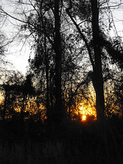Wooded Backyard. (dccradio) Tags: lumberton nc northcarolina robesoncounty outdoor outdoors outside nature natural tree trees woods wooded forest evening tuesday tuesdayevening march spring springtime goodevening treebranch treebranches branch branches treelimb treelimbs fuji finepix s1000fd bridgecamera sky bluesky eveningsky sunset settingsun silhouette