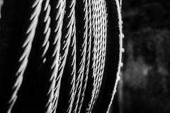 rope (lucky5.1) Tags: sw bw analog film hp5 festung fortress königstein sachsen saxonia elbsandsteingebirge f90x scan coolscaniv