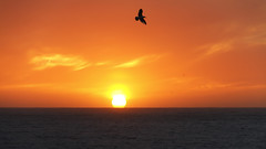 Puesta de sol en Oporto (jc.mendo) Tags: jcmendo canon 7d tamron 18270 sea seagull seascape mar gaviota puestadesol sol sunset agua atardecer water sky