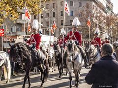 2751 Guardia urbana de Barcelona (Ricard Gabarrús) Tags: desfile caballos guardia guardiaurbanadebarcelona fauna olympus cabalgata fiesta plumas plumeros ricgaba ricardgabarrus