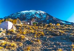 _FOU9665.jpg (Murray Foubister) Tags: 2018 gadventures spring mountainsm flora travel treking africa tanazania