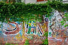 老牆上的綠 (bravesheng) Tags: 塗鴉 牆 綠色 藤蔓 植物