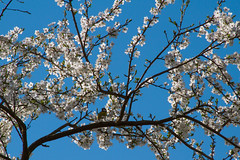 Meise (Tatjana_Schmid) Tags: spaziergang walk natur nature frühling spring niederbayern vogel bird baum tree