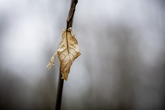 A Cloudy New Year's Day (wowafo) Tags: macro wood leaf blatt wald forest nature natur rainy day new year 2019 sony alpha 6000 natureart sonyflickraward
