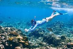 snorkelling image