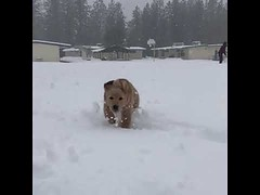 I love Winter I love Snow - Cute Dogs (tipiboogor1984) Tags: aww cute cat funny dog youtube