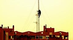 Un trabajo de altura (portalealba) Tags: zaragoza aragon españa spain portalealba pentax pentaxk50 1001nights 1001nightsmagiccity 1001nightsmagicwindow