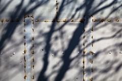 Zone protégée (Gerard Hermand) Tags: 1903227579 gerardhermand france paris canon eos5dmarkii ombre shadow arbre tree metal plaque sheet fouquets