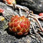 Succulent Plant thumbnail