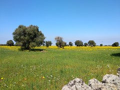 IMG_20190410_132035 (tetiana_solopiienko) Tags: puglia italy bari adriatic monopoli