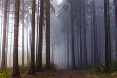 The first and only (Petr Sýkora) Tags: les mlha podzim forest nature fog mist atmosphere path