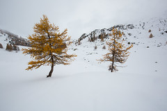Guardians Of Silence #3 (Nicolas Gailland) Tags: valleedelaclaree nevache névache cerces galibier alpes alpe alps france canon hitech gnd mark landscape nature paysage montagne mountain snow neige white blanc hiver winter trees firs colors couleurs autumn fall claree clarée