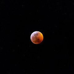 Super Blood Wolf Moon (britt_hester) Tags: superbloodwolfmoon bloodmoon supermoon moon moonshot astrophotography space sonyimages sonyalpha sony telephoto