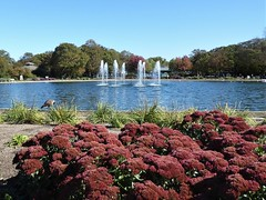 Brookfield, IL, Brookfield Zoo, Fountain and Pond with Surrounding Garden (Mary Warren 12.4+ Million Views) Tags: brookfieldil brookfieldzoo nature fauna flora pond pool water fountain red blooms blossoms flowers crysanthemums trees
