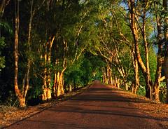 Dusk Road (Peedie68) Tags: australia northernterritory nt foggdam sunset