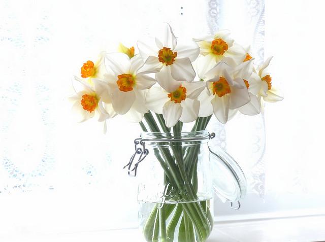 Обои букет, банка, нарциссы картинки на рабочий стол, раздел цветы - скачать