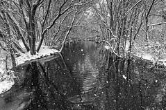 Granite Creek. Prescott, AZ. (j1985w) Tags: prescott arizona water snow river granitecreek trees reflection