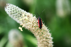 Red beetle 5 (benrokh) Tags: m50 stm canonm50 eosm50 55250 55250stm is