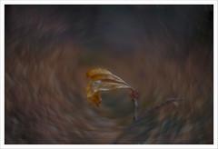 Back in USSR 12 (Outlaw Pete 65) Tags: macro closeup foglia leaf colori colours natura nature nikond750 zenithelios58mm brescia lombardia italia
