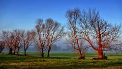 Morning light (Kari Siren) Tags: morning light tree mist spain