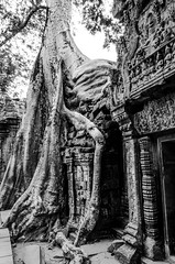 Part of the temple (Cédric Nitseg) Tags: nikon asie siemreap greelow travelling backpacking backpacker tree travel asia noiretblanc cambodge arbre voyage d7000 blackandwhite temple cambodia