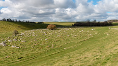 Sarsen drift in the North Wessex AONB (Keith now in Wiltshire) Tags: sarsen stone boulder rock drift field greywether fyfield downs grass hill tree landscape wiltshire wessex sky