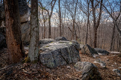 A Walk in the Woods (John Brighenti) Tags: outdoors outside nature natural spring march sony alpha a7rii ilce7rm2 emount femount bealpha sonyshooter woods forest trees rocks sky ground dead leaves rachelcarson conservation park brookville maryland md landscape hiling path tamron 2875mm zoom wide angle lens blue brown grey black