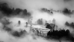 Fogginess (gwennscott) Tags: fog mist cold landscape blackwhite monochrome