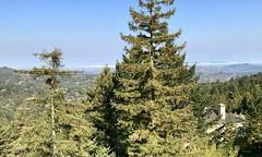 #Lunch in #Marin #California (Σταύρος) Tags: mountainhomein californië marin lunch qualitytime myview trees bayarea marincounty californie cali norcal northerncalifornia california cascadecanyon millvalley kalifornien kalifornia καλιφόρνια カリフォルニア州 캘리포니아 주 カリフォルニア 加州 калифорния แคลิฟอร์เนีย كاليفورنيا rooftop