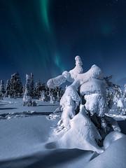 Slow dance (Andrei Baskevich) Tags: auroraborealis aurora northernlight winter trees frost frozen light night