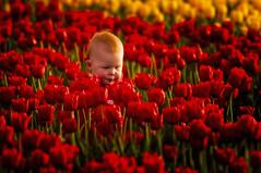 A game of Waldo (Randy A. Eckert_2015) Tags: waldo tulip tulipfield
