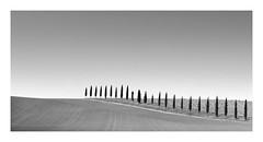 CHUBBY (Nick green2012) Tags: illume silence tuscany landscape cypress trees 21 minimal blackandwhite