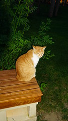 2015-06-09_20-18-22_ILCE-6000_DSC07137 (Miguel Discart (Photos Vrac)) Tags: 2015 33mm animal animalphotography animals animalsupclose animaux aube cat cats chat chats couchedesoleil crepuscule dawn dusk e18200mmf3563 focallength33mm focallengthin35mmformat33mm hotel ilce6000 iso1000 levedesoleil longexposure nature naturephotography night noche nuit pet soleil sony sonyilce6000 sonyilce6000e18200mmf3563 sunrise sunset turquie twilight vacance