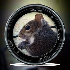 Moment in View! (jlynfriend) Tags: phonephoto lg squirrel animal pip illustration art design cute