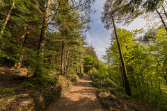 Hatch Wood (trevorhicks) Tags: tavistock england unitedkingdom gb devpn hatch wood naked nude path pathway forest trees leaves sky clouds outdoor plant branch hill woodland canon 5d mark iv sigma