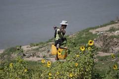 retour du fleuve (Patrick Doreau) Tags: homme chapeau fleur fleuve eau panier jaune tournesol man hat flower yellow water river burma birmanie myanmar