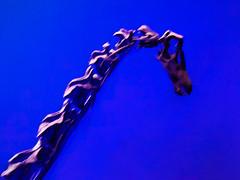 Looking for a Necktie (Steve Taylor (Photography)) Tags: asia singapore model blue mauve purple minimalism minimalist blur bones fossil leekongchiannaturalhistorymuseum lkc naturalhistory skeleton dinosaur