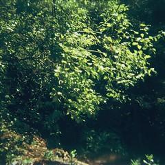 Green (Matthew Paul Argall) Tags: coronet44 fixedfocus 127 127film squareformat squarephoto 4x4 rerachrome100 100isofilm green plant plants