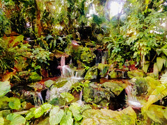 Watching the Water Flow (Steve Taylor (Photography)) Tags: waterfall zoo black brown green rock stone water asia singapore plant fern bush flora foliage trees