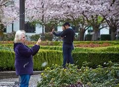 Vivitar 28-200mm f/3.5 Cherry Blossom Pix (coljacksg) Tags: vivitar 28200mm f35 cherry blossom pix vintage lens test salem oregon sony a7r selfie さくら サクラ 桜 sakura blossoms sunagor macro kobori