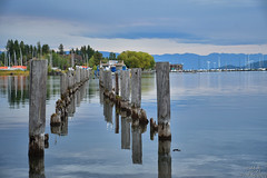 Lost in Somers (DirtyDeeble67) Tags: somers montana somersmontana mt flatheadlake lake discover dlsr d7500 nikon nikond7500 travel traveling adventure adventuring explore exploring photography photograph photo cloudy overcast hiking hike outdoors nature naturewalk