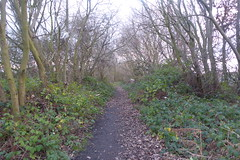 Old railway trackbed, Athersley North, Barnsley. (former Carlton branch line)   January 2019 (dave_attrill) Tags: cutting athersley north branch carlton disused railway line trackbed remains abandoned footpath barnsley southyorkshire yorkshire grass trees overgrowth vegetation january 2019